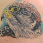 b8424_tete_aigle_tatouage_photo_greg
